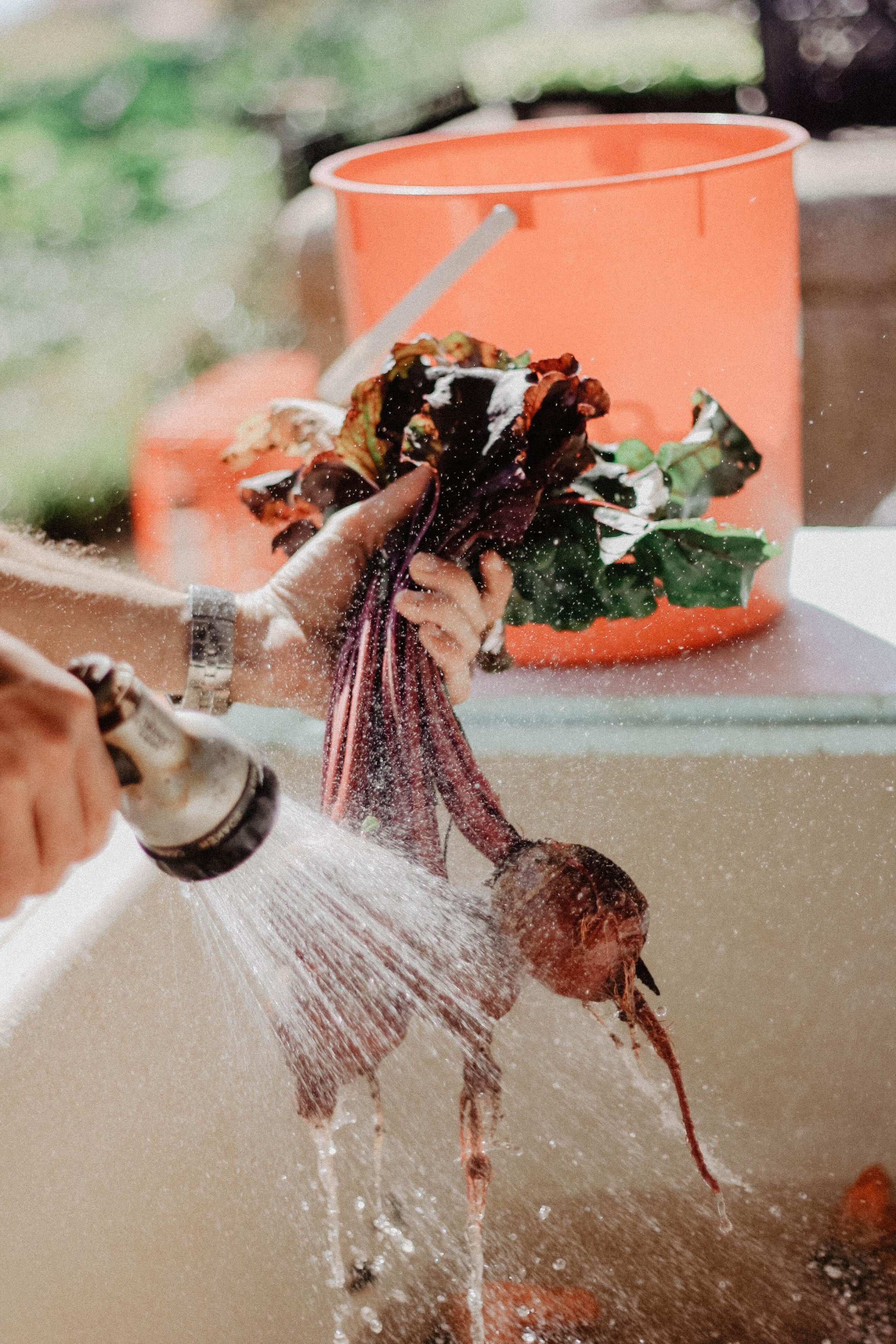 cleaning-vegetables-1034825.jpg
